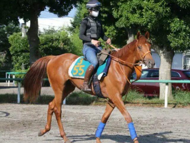 今日、注目の新馬戦スワーヴエルメ